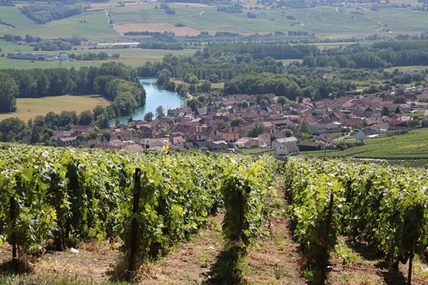 Hautvillers--C--Pascal-Bodez-Region-Grand-Est--36.png
